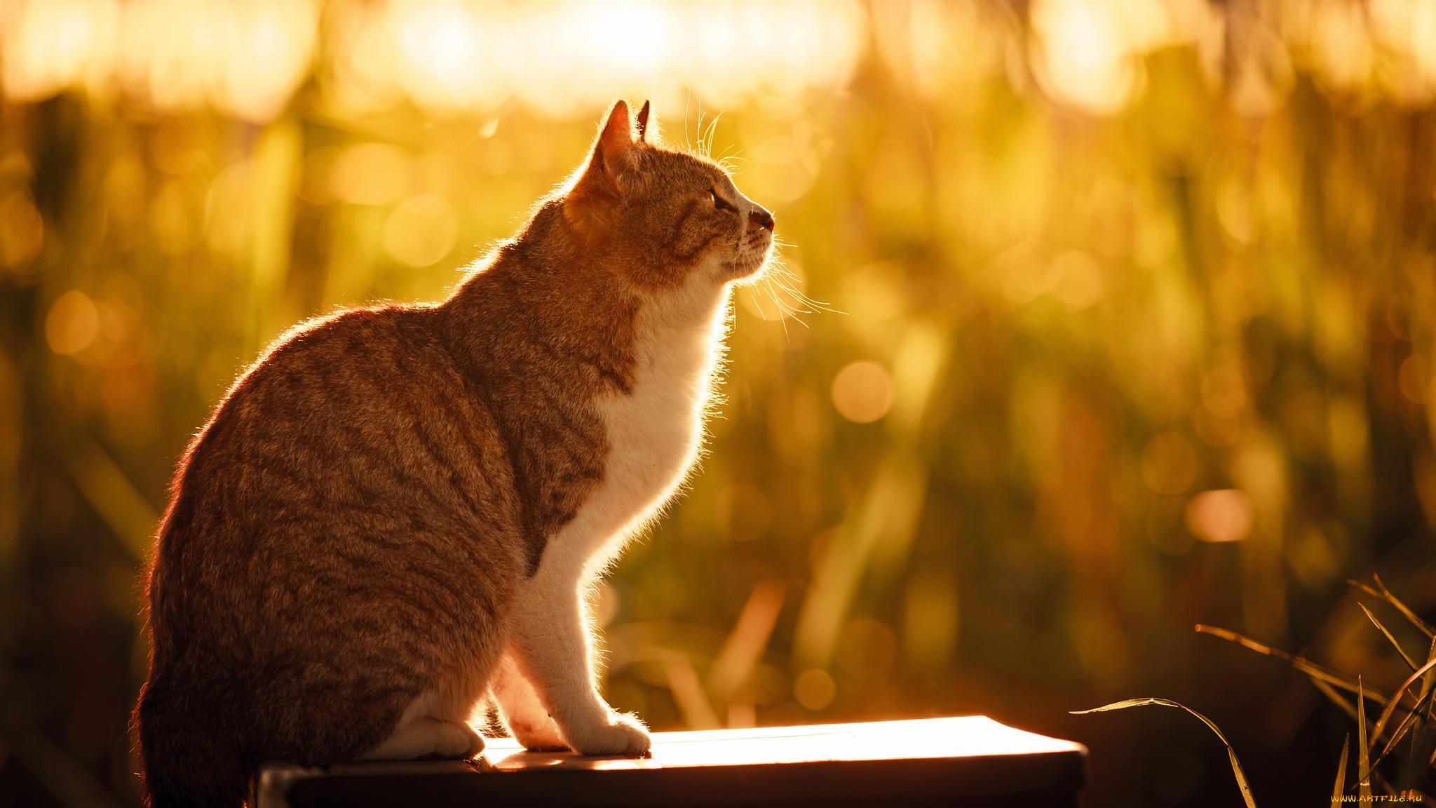 Фото сидящего боком кота